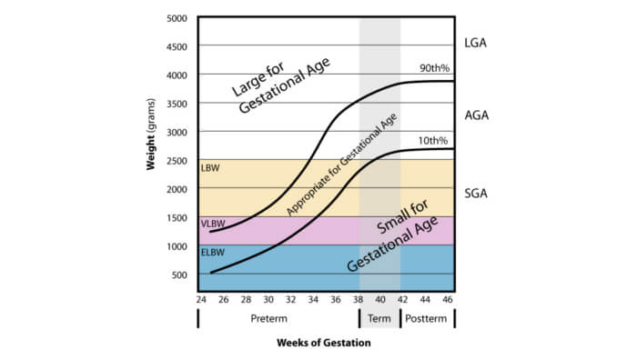Growth scan weight chart